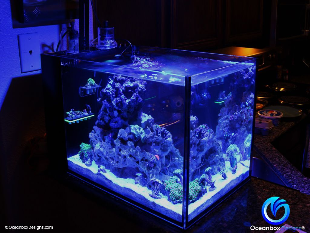 Glo Magnetic Mini Frag Racks Oceanbox Designs